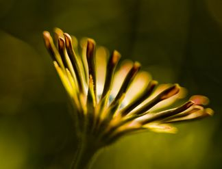 Flower Abstract by Gary Bandzmer